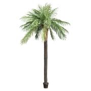 Palmboom Feestmateriaal verhuur