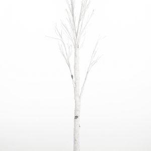 Berkenboom Feestmateriaal verhuur
